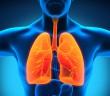 Cordyceps a rakovina plic