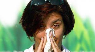 Betaglukan v medicinálních houbách může zmírnit alergii na ambrozii