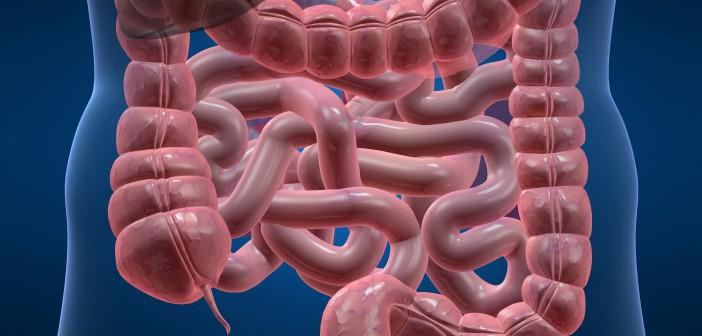 Hericium v boji proti rakovině střev