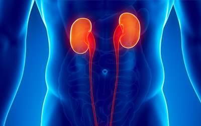 Maitake a rakovina ledvin